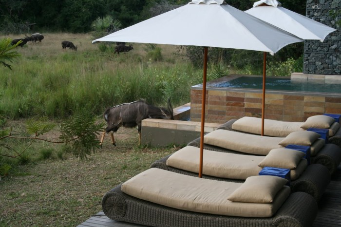 Nyala plunge pool drink