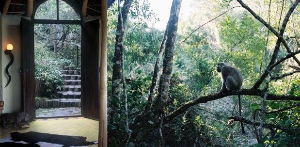 Phantom Forest monkey