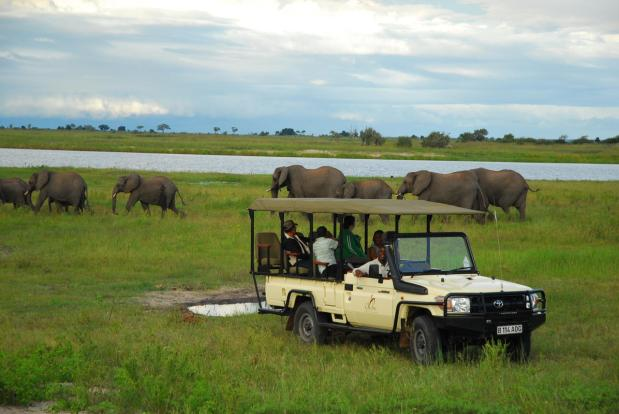 Chobe Chilwero Ellies